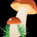 hongos pitufos 02