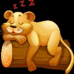 Mono Mickey Safari Puma