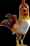gallo zenon