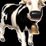 vaca zenon