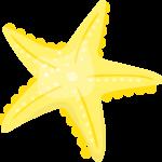 estrella mar 08 megaidea