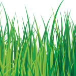 grass pasto