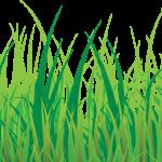 grass pasto2