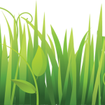 grass pasto3