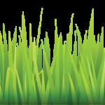 grass pasto4