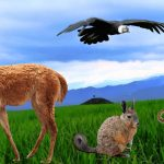 Imágenes de Animales en PNG – sin fondo