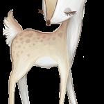 ciervo del bosque