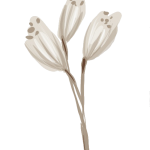 flor blanca bosque