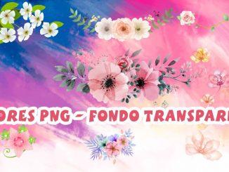 flores fondo transparente