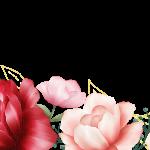 flores sin fondo rojo megaidea