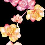 flores sin fondo rojo megaidea999