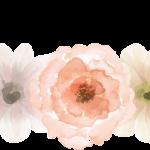 flores sin fondo22