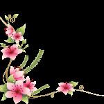 flores sin fondo33