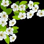 flores sin fondo44