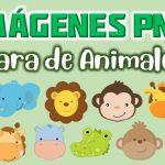 Imagenes Cara de animales Clipart PNG transparente