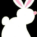 conejo 6 1
