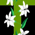 cruz 36