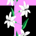 cruz 38