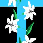 cruz 40