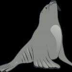 foca 1