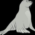 foca 2