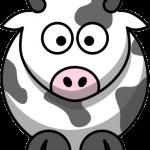vaca4