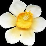 flores 59
