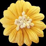 flores 60