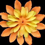 flores 61