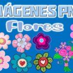 Imagenes de Flores Clipart PNG transparente