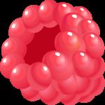 fruta 2 1
