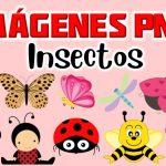 Imagenes de Insectos Clipart PNG transparente