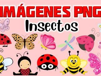 insecto portada 1