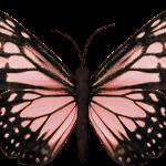mariposas 10 1