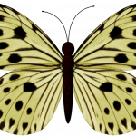 mariposas 12 1