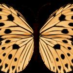 mariposas 13 1