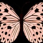mariposas 14 1