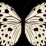 mariposas 15 1