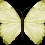 mariposas 2 1