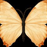 mariposas 3 1