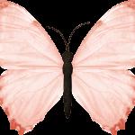 mariposas 4 1
