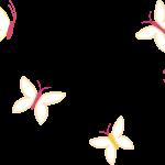 mariposas 48 1