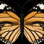 mariposas 6 1