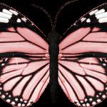 mariposas 7 1