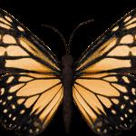 mariposas 9 1