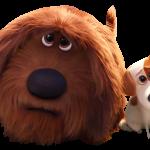 La vida secreta de tus mascotas 15