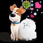 La vida secreta de tus mascotas 22