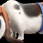 La vida secreta de tus mascotas 48