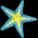 Star Luca