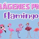 Imágenes PNG flamingo GRATIS con fondo transparente